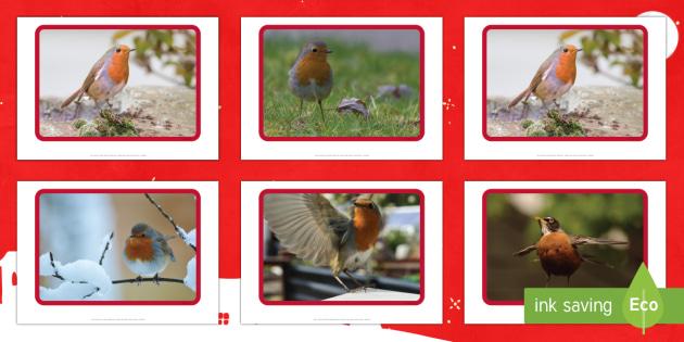 Robin Display Photos - robin, christmas, festive, winter, birds, garden,