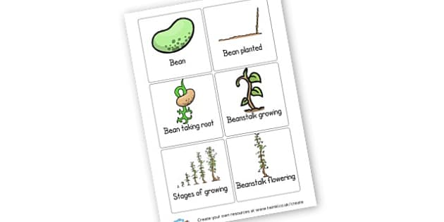 Beanstalk Stages - Bean Life Cycle Primary Resources, bean, plant, seed, lifecyle