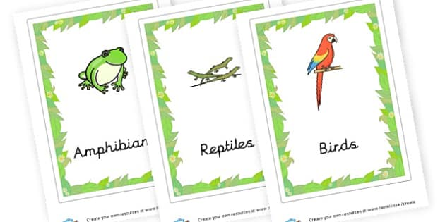 Animal Groups Cards - Primary Resources English, Literacy, Letters and Sounds, phonics