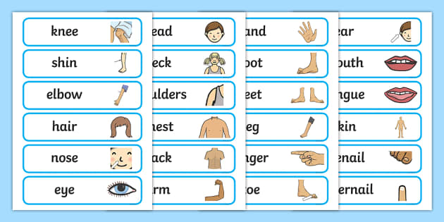 Body Parts Labels - The Human Body Primary Resources, Body, Our Bodies, Human, Life