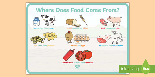 where does food come from display poster where does food come. Black Bedroom Furniture Sets. Home Design Ideas