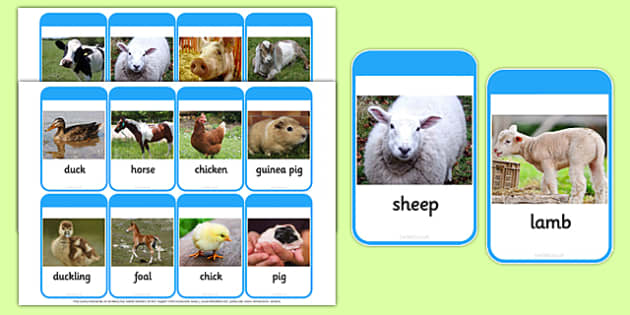 Mothers and their Young Farm Animals Photo Flash Cards - animals