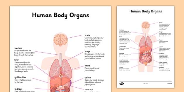 human body organs information - human body, organs, information, Human Body