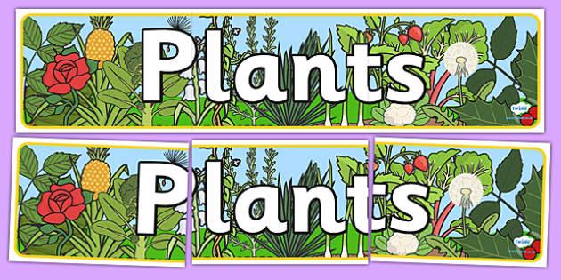 Plants Display Banner - plants, plant, display banner, banner
