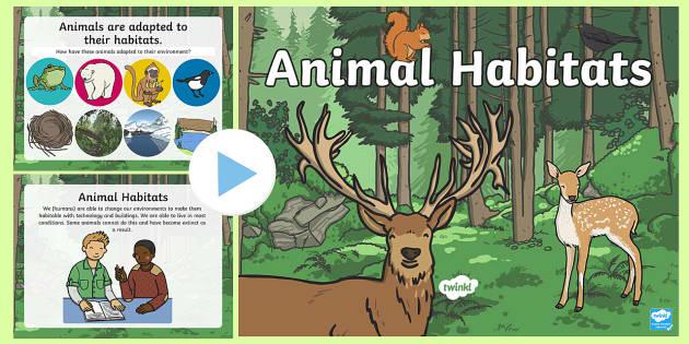 Animal Habitats PowerPoint - Habitat Primary Resources
