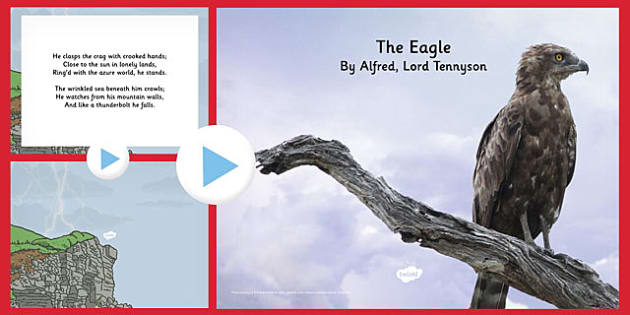 "a powerful poem in alfred lord tennysons the eagle Critical analysis of the eagle by lord tennyson the name of the poem i am writing about is called ""the eagle"" by alfred, lord tennyson."