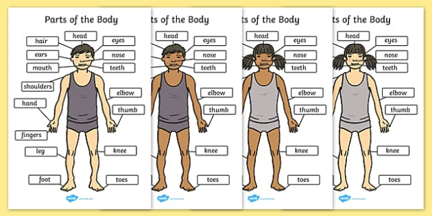 parts of the body (a4) - eyes, nose, mouth, back, display, Human Body