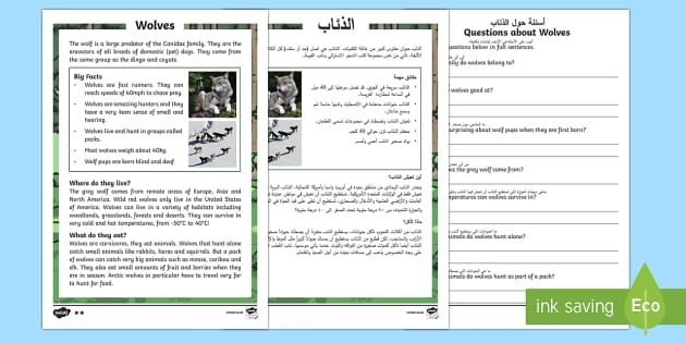 Wolves Differentiated Reading Comprehension Activity Arabic/English - KS1 reading, comprehension, questions, wolves, information, non-fiction, animals, fact files,Arabic-