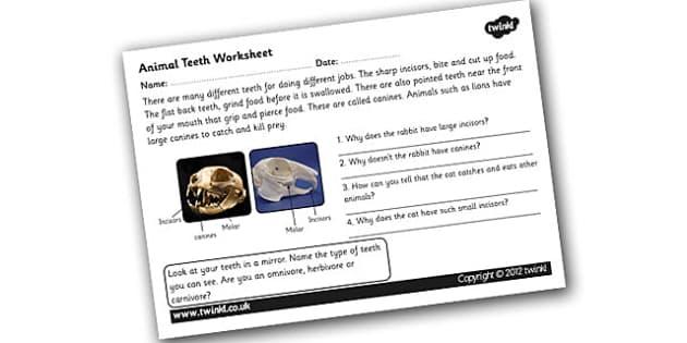 animal teeth worksheet teeth different teeth animal teeth. Black Bedroom Furniture Sets. Home Design Ideas