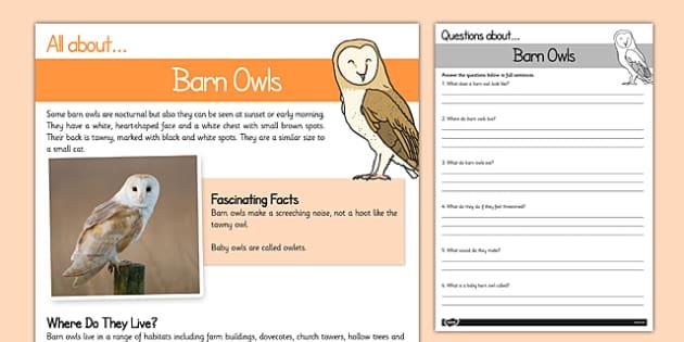 Barn Owls Reading Comprehension - barn owl, reading comprehension