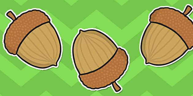 Acorn Display Cut-Out - acorn, display, cut out, cut, out, nut