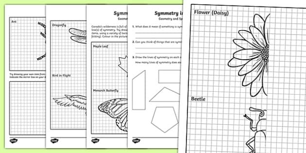 symmetry in nature activity sheet worksheet. Black Bedroom Furniture Sets. Home Design Ideas