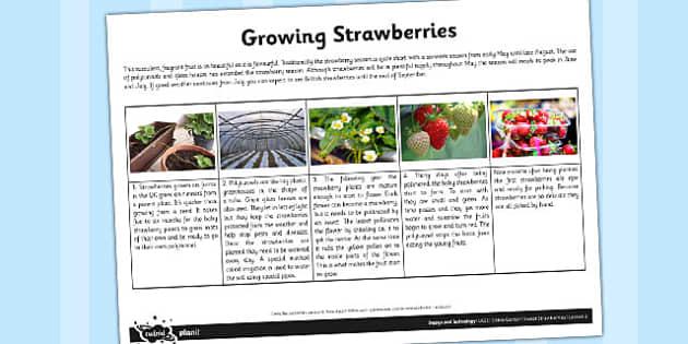 Fact Sheet Growing Strawberries - garden, strawberry, plants