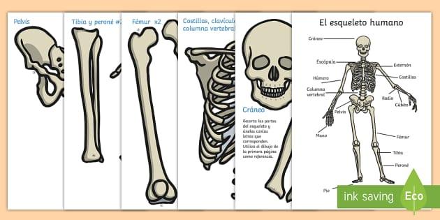 Imágenes De Exposición: El Esqueleto Humano