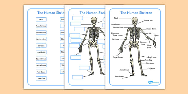human skeleton labelling sheets (common names) - free download, Skeleton