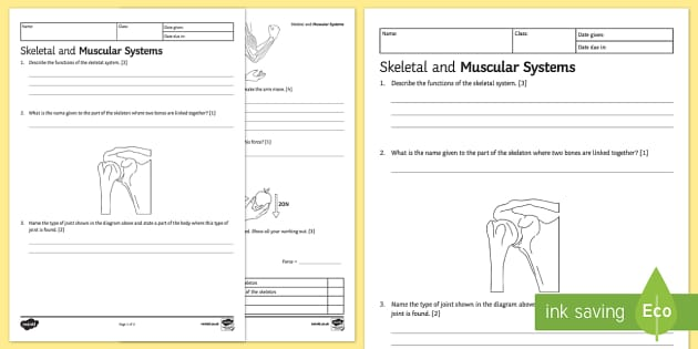 ks3 skeletal and muscular systems homework activity sheet, Skeleton