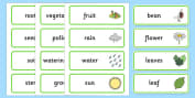 Plant and Growth Topic Word Cards