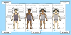 Body Parts Labelling Activity French
