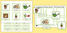 Plant Growth Sequencing Activity French