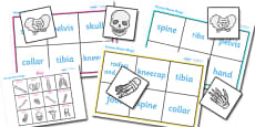 Bones of the Body Bingo