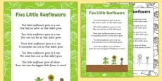 Five Little Sunflowers Counting Song Sheet