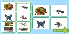 New Zealand Insect Fact Cards