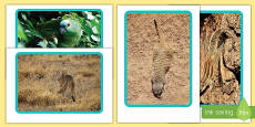 Animal Camouflage Display Photos