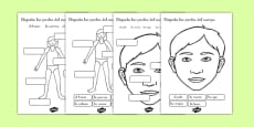 Ficha Etiqueta las partes del cuerpo