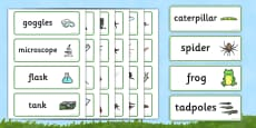 Minibeasts Investigation Lab Role Play Word Cards