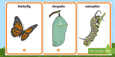 * NEW * Life Cycle of a Butterfly Display Posters