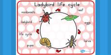 Australia - Ladybird Life Cycle Word Mat