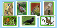 British Birds Display Photos