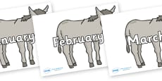 Months of the Year on Donkeys