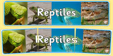 Reptiles Photo Display Banner