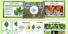 Deciduous and Evergreen Trees Differentiated Lesson Teaching Pack