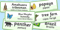 Rainforest Word Cards Romanian Translation