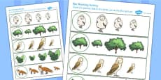 Owl Size Matching Activity Sheet