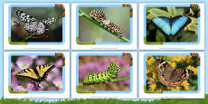 Butterflies and Caterpillars Photo Pack