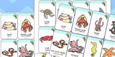 Under the Sea Flashcards Arabic Translation