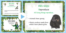 Mrs Nerg Life Processes Characteristics of Living Things Flash PowerPoint