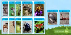 Fotos de exposición: Los bichos