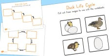 Australia - Duck Life Cycle Activity Sheets
