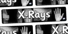 X Ray Display Banner