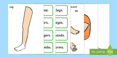Body Part Counting Cut-Out Activity