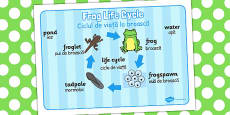 Frog Life Cycle Word Mat Romanian Translation
