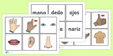 Parts of the Body Word and Picture Matching Cards Spanish