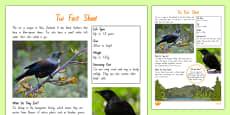 New Zealand Native Birds Tui Fact Sheet