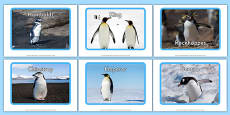 Penguin Species Display Photos