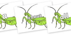 100 High Frequency Words on Praying Mantis