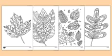 Autumn Themed Mindfulness Colouring Sheets
